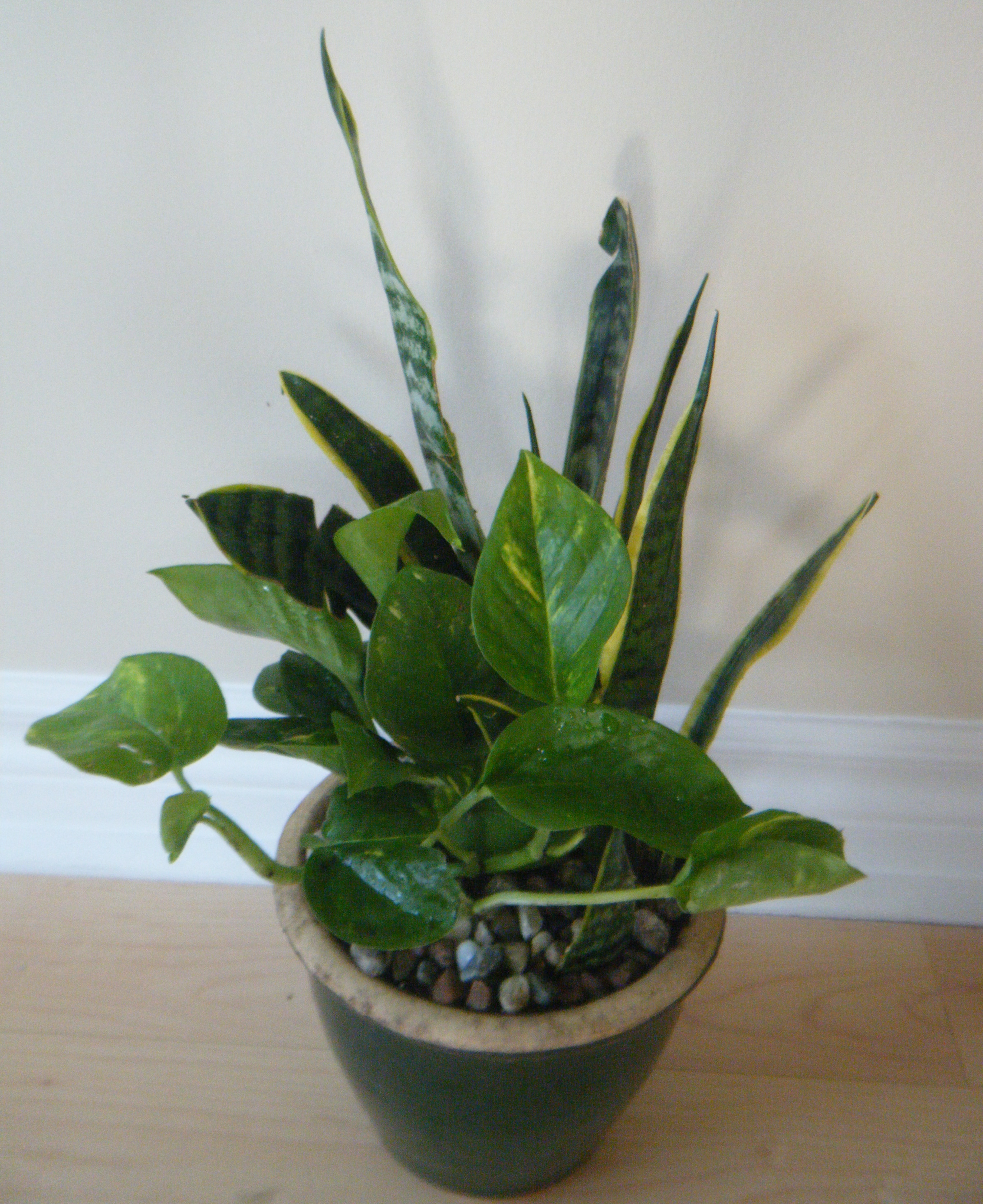 Best Indoor Plants For Clean Air Nasa Snake Plant Pics About Space