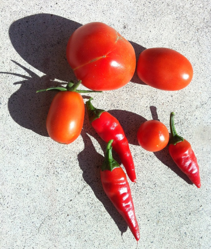 Container Harvest - August 7th, 2012